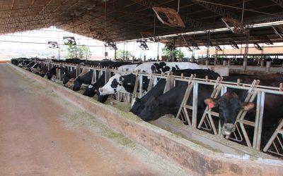 Entenda a importância de investir em Compost Barn